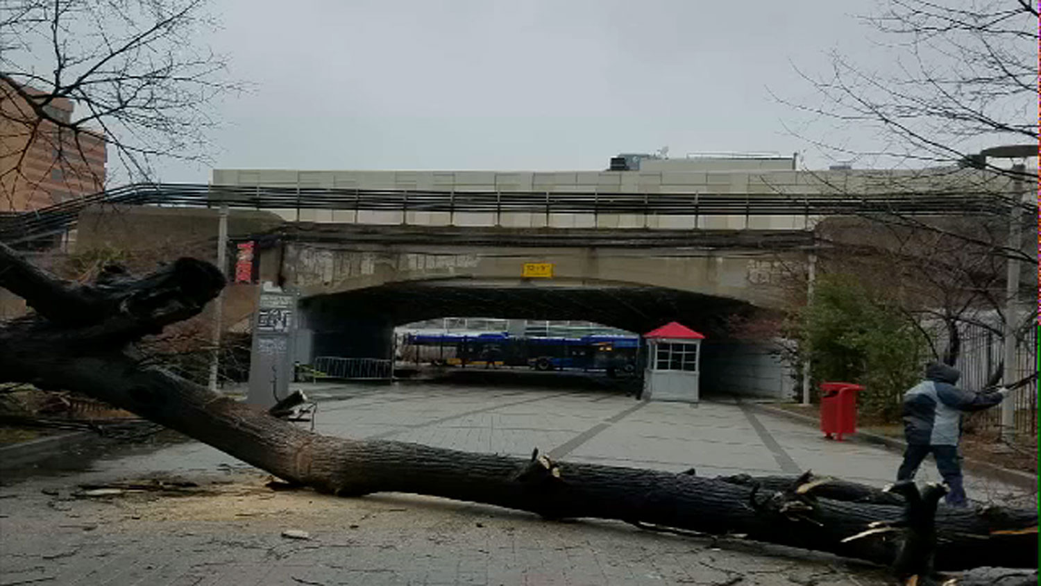 <div class='meta'><div class='origin-logo' data-origin='none'></div><span class='caption-text' data-credit=''>A tree fell on a student near York College in Jamaica, Queens</span></div>