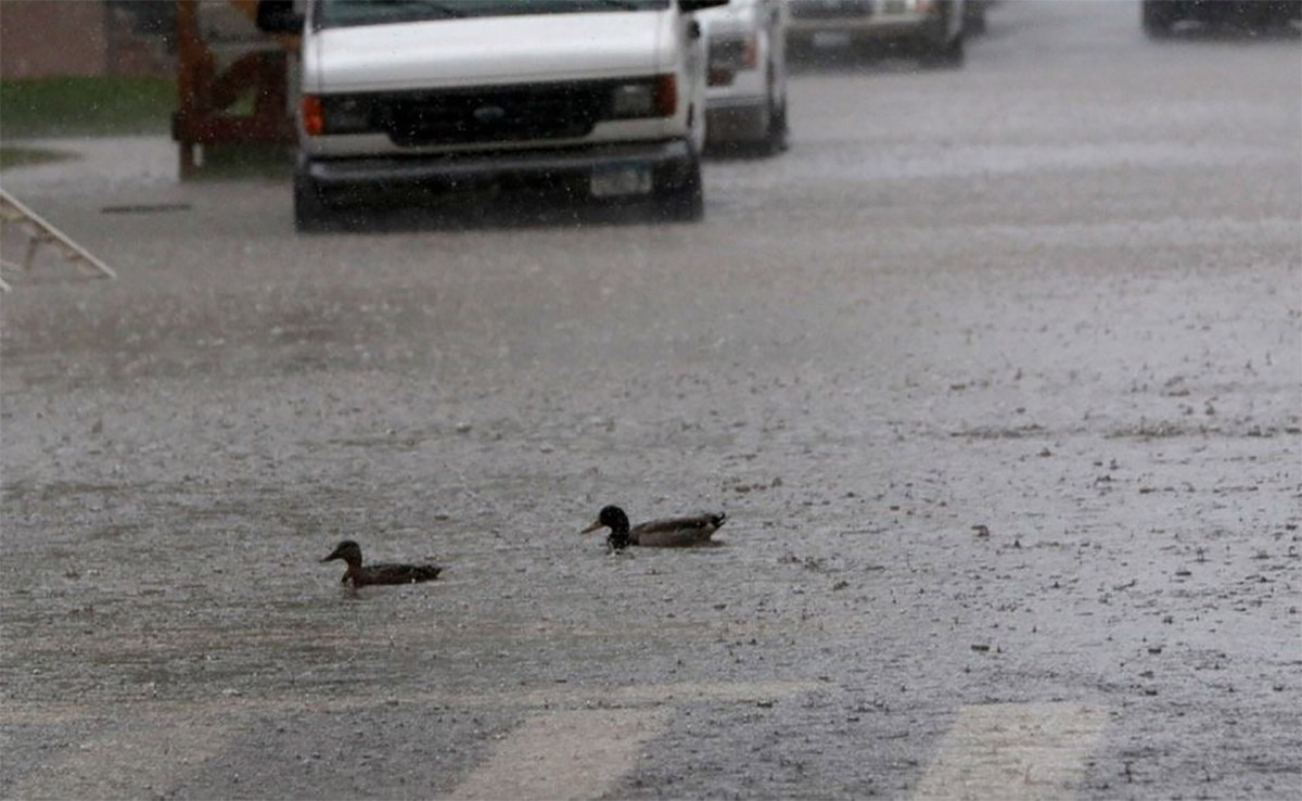 <div class='meta'><div class='origin-logo' data-origin='none'></div><span class='caption-text' data-credit='Photo: Staten Island Advance/ Bill Lyons'>A pair of ducks swim accross the intersection of Foch Ave. and Kensington Ave. in South Beach as heavy rain caused flooding in low lying areas Friday, May 5, 2017.</span></div>