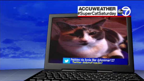 "<div class=""meta image-caption""><div class=""origin-logo origin-image none""><span>none</span></div><span class=""caption-text"">Super Cat Saturday - May 28, 2016</span></div>"
