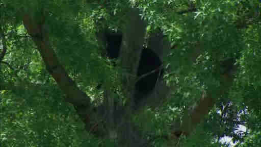 A bear was stuck in a tree near a school in Paramus, New Jersey.