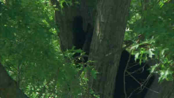 "<div class=""meta image-caption""><div class=""origin-logo origin-image ""><span></span></div><span class=""caption-text"">A bear was stuck in a tree near a school in Paramus, New Jersey.</span></div>"