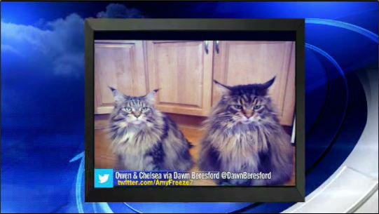 Send us your photos using Twitter and Instagram using the hashtags #SuperCatSaturday or #BigDogSunday, or send photos to Amy via Twitter @AmyFreeze7 <span class=meta>ABC Photo/WABC</span>
