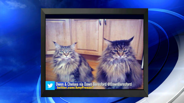Send us your photos using Twitter and Instagram using the hashtags #SuperCatSaturday or #BigDogSunday, or send photos to Amy via Twitter @AmyFreeze7 <span class=meta></span>