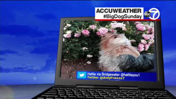 "<div class=""meta image-caption""><div class=""origin-logo origin-image wabc""><span>WABC</span></div><span class=""caption-text"">Big Dog Sunday - July 17, 2016</span></div>"