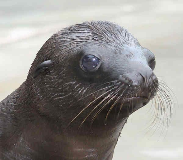 "<div class=""meta image-caption""><div class=""origin-logo origin-image none""><span>none</span></div><span class=""caption-text"">Piper, born June 5, and Ridley, born June 18, are both high-spirited and full of energy, according to Jessica Peranteau, senior supervisor of animal training.</span></div>"