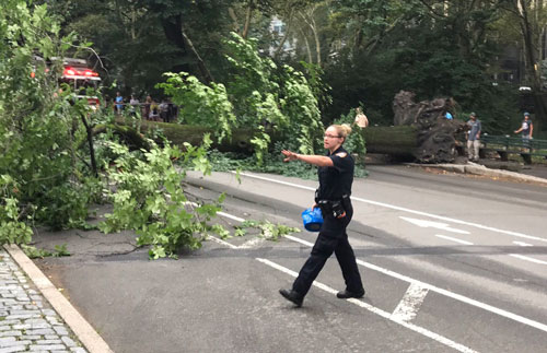 <div class='meta'><div class='origin-logo' data-origin='none'></div><span class='caption-text' data-credit='@linorulli / Twitter'>Large tree that fell on a mother and her children in Central Park</span></div>