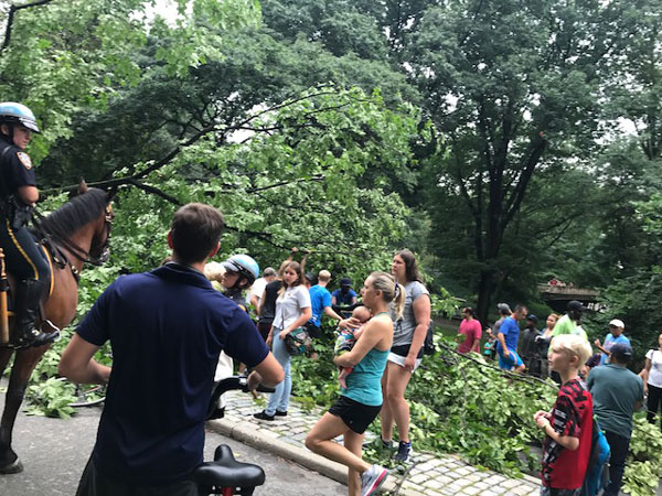 <div class='meta'><div class='origin-logo' data-origin='none'></div><span class='caption-text' data-credit='Erin Ade'>Good Samaritans try to rescue a woman trapped under the fallen Central Park tree.</span></div>