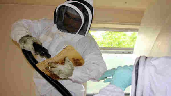 <div class='meta'><div class='origin-logo' data-origin='none'></div><span class='caption-text' data-credit='Roy Renna / BMR Breaking News'>The bees were removed humanely and will be relocated to a bee farm. 17 Honeycombs that were made by the bees were removed and taken to the bee farm.</span></div>