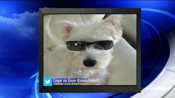 "<div class=""meta image-caption""><div class=""origin-logo origin-image none""><span>none</span></div><span class=""caption-text"">Send us your photos using Twitter and Instagram using the hashtags #SuperCatSaturday or #BigDogSunday, or send photos to Amy via Twitter @AmyFreeze7</span></div>"