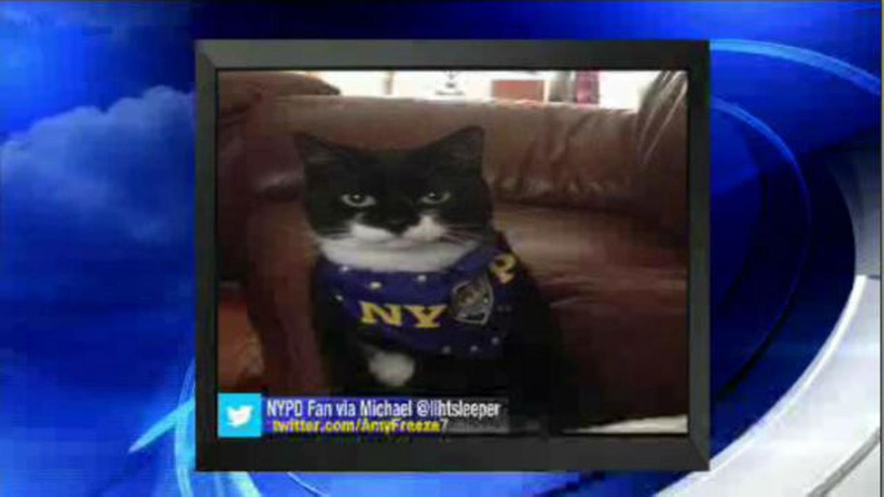 PHOTOS: Super Cat Saturday and Big Dog Sunday WABC
