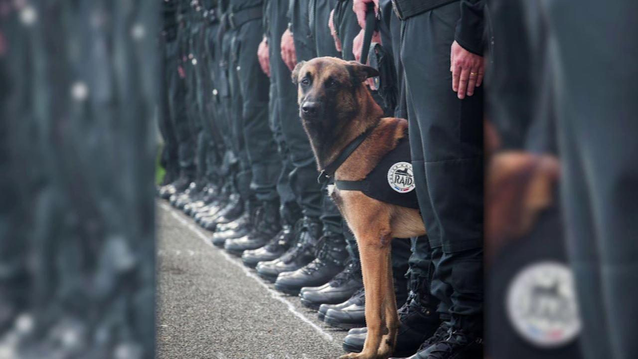 Police K-9 dog killed in raid on terror suspects in Paris identified as Diesel