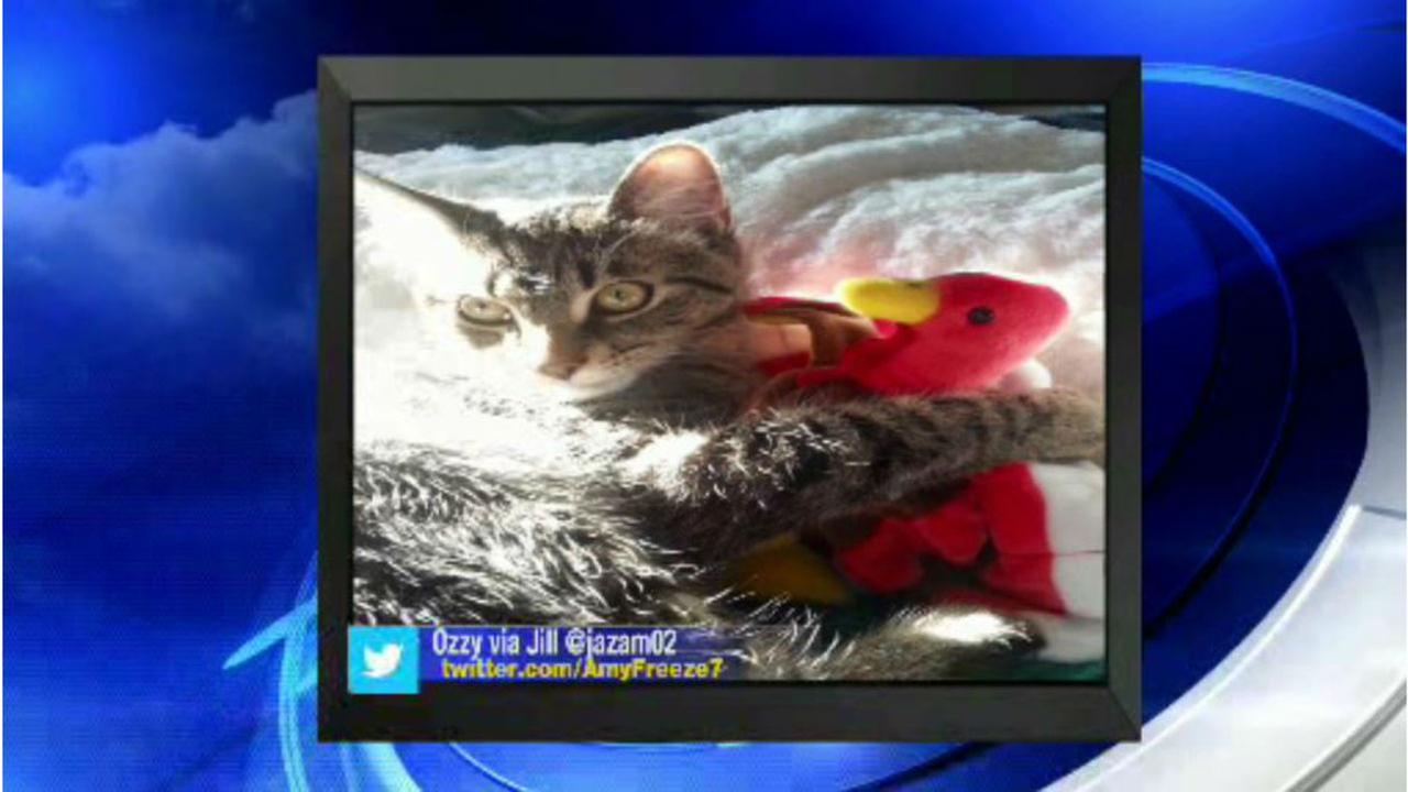 PHOTOS: Super Cat Saturday and Big Dog SundayWABC