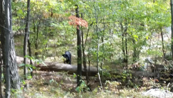 """<div class=""""meta image-caption""""><div class=""""origin-logo origin-image """"><span></span></div><span class=""""caption-text"""">Photos of the bear that killed a hiker in Apshawa Preserve in West Milford, New Jersey in September.   Darsh Patel, the hiker who was killed, took 5 of the photos.</span></div>"""
