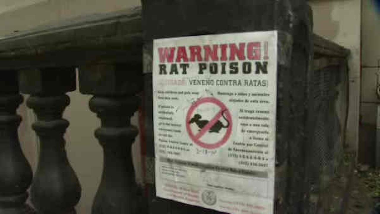 rat crackdown