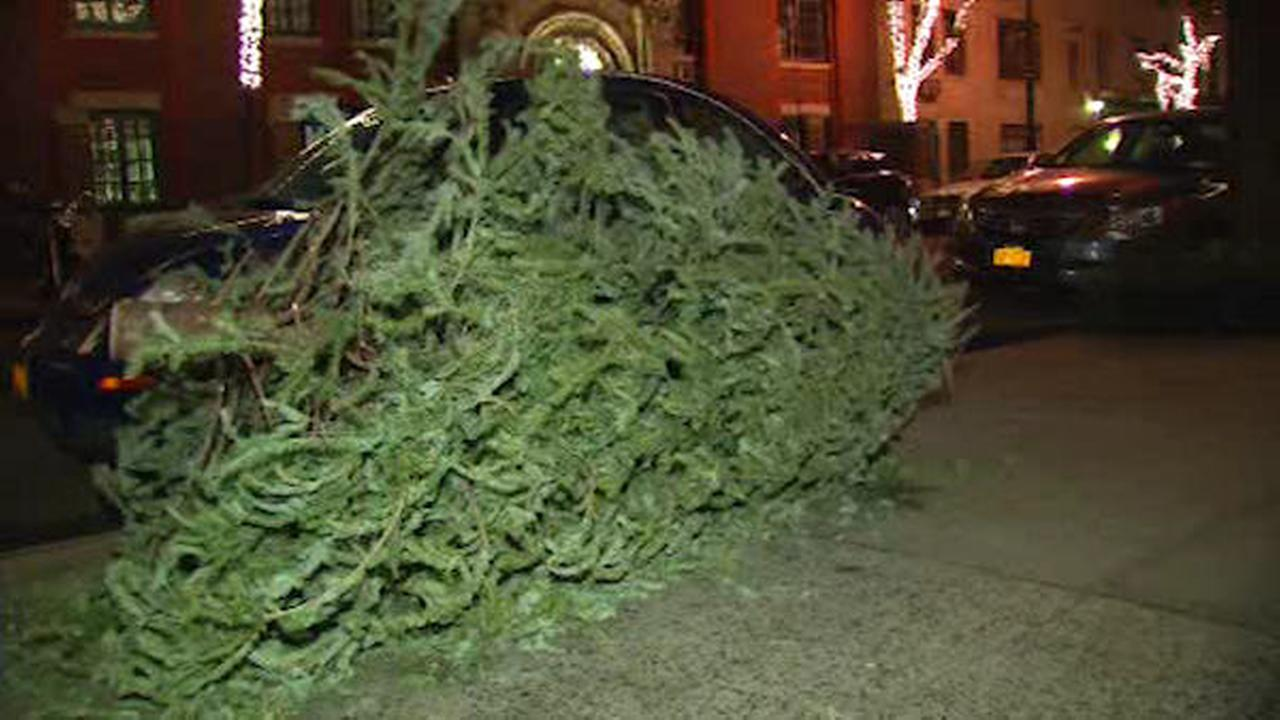 Christmas trees still littering many sidewalks and curbs in New York City