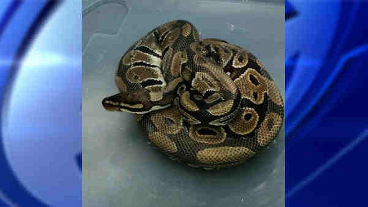 snake in holbrook apartment
