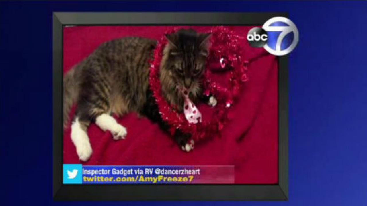 PHOTOS: Big Dogs and Super Cats WABC