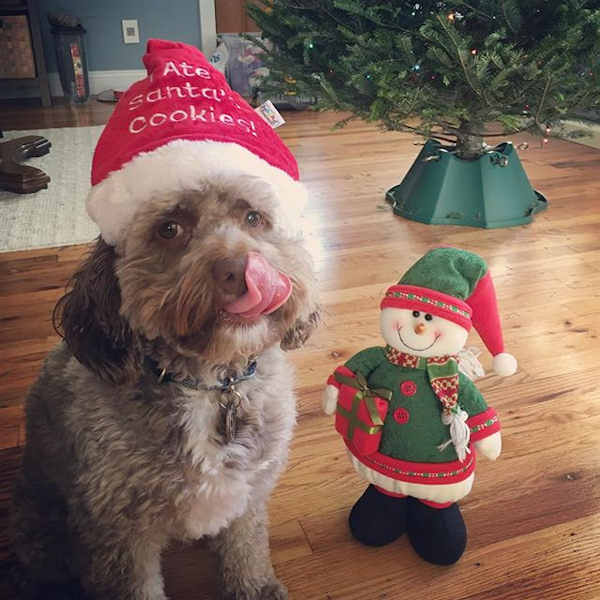 "<div class=""meta image-caption""><div class=""origin-logo origin-image none""><span>none</span></div><span class=""caption-text"">Holiday images sent in by our Eyewitness News viewers! (Courtesy: @chester_phantom_pup/Instagram )</span></div>"