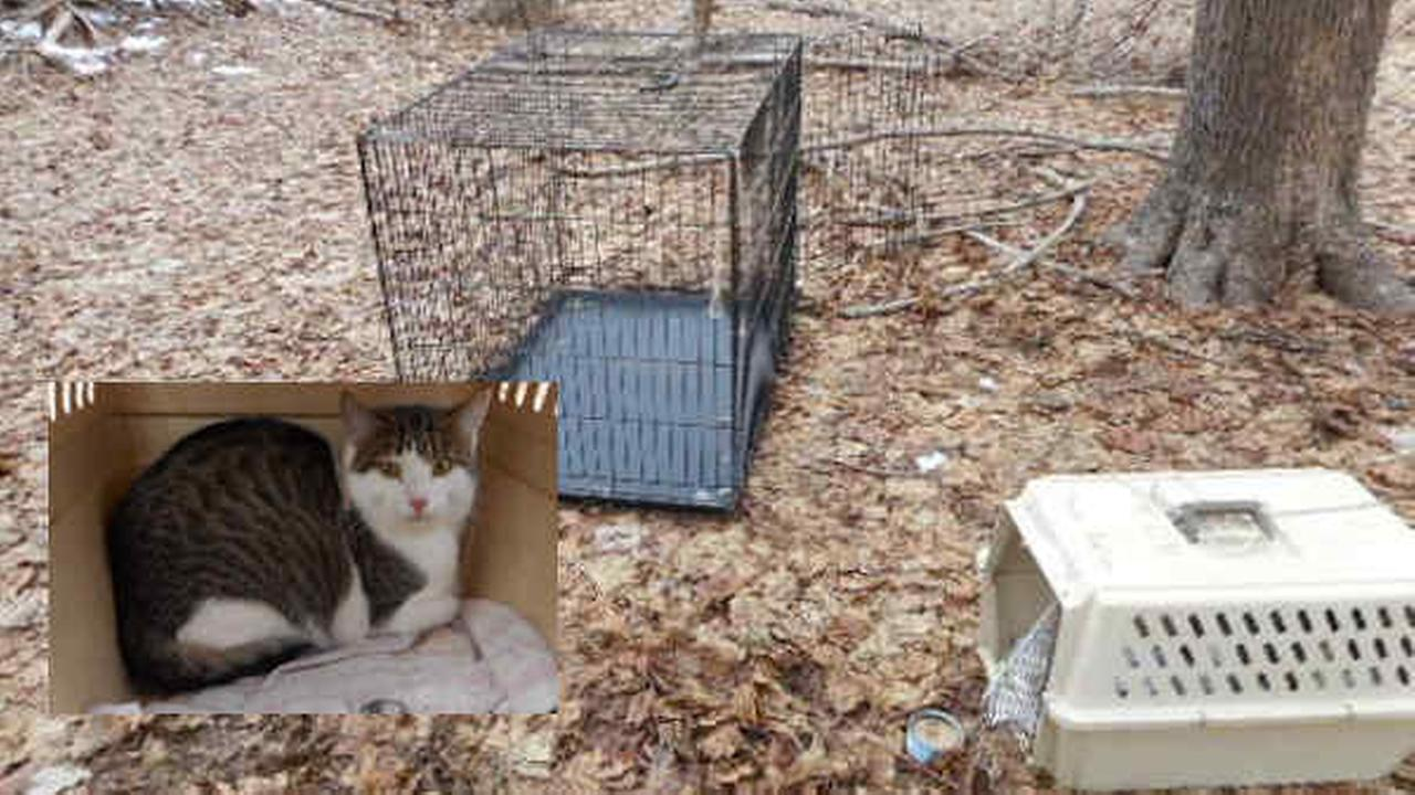 Reward offered after cat, 4 dead kittens abandoned in Patchogue