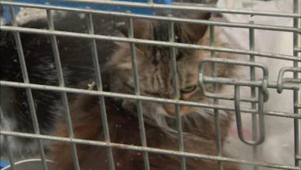 """<div class=""""meta image-caption""""><div class=""""origin-logo origin-image """"><span></span></div><span class=""""caption-text"""">More than 100 birds, 20 cats, and a dog were found living in deplorable conditions inside of a Huntington home. (WABC Photo/ WABC)</span></div>"""