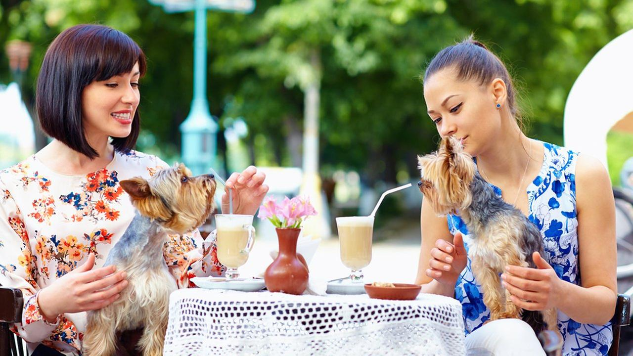 It's now easier to dine with your dog on patios in New York City