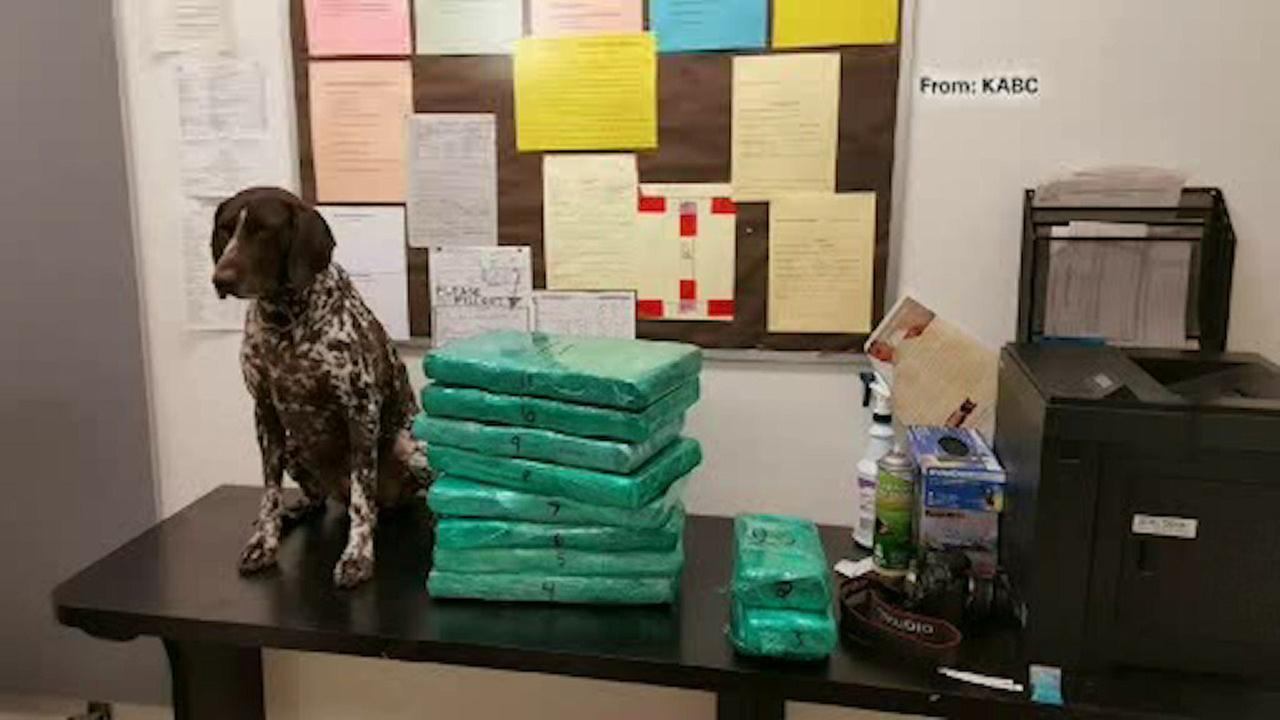 Flight attendant heading to NYC found to have 70 pounds of cocaine, runs from security