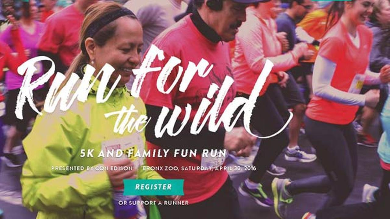 Run for the Wild at the Bronx Zoo!