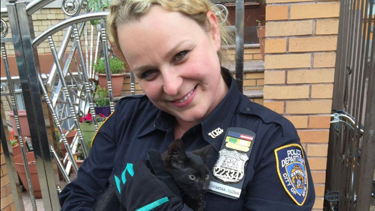 Police rescue kitten from car engine in Queens