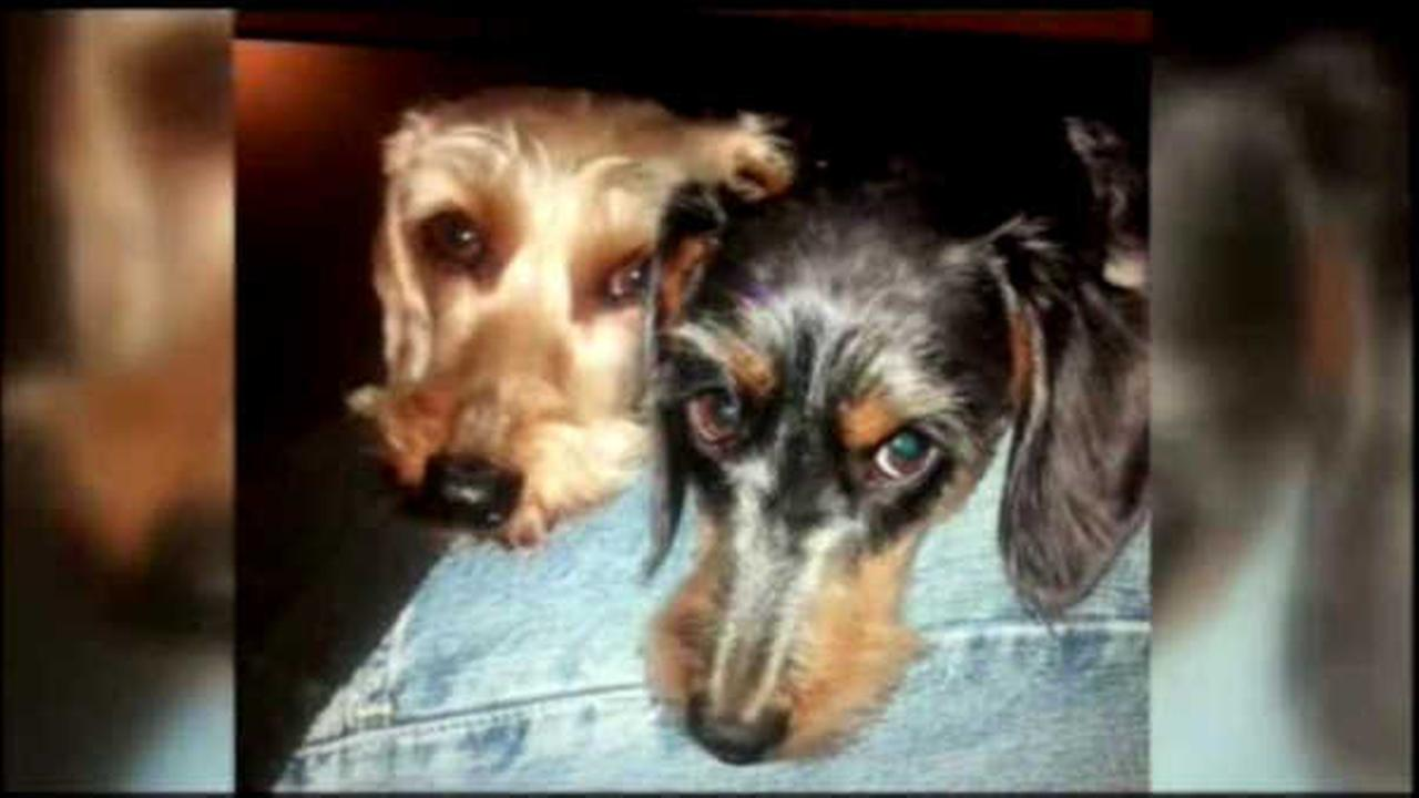 2 dogs killed in angry bee attack in California
