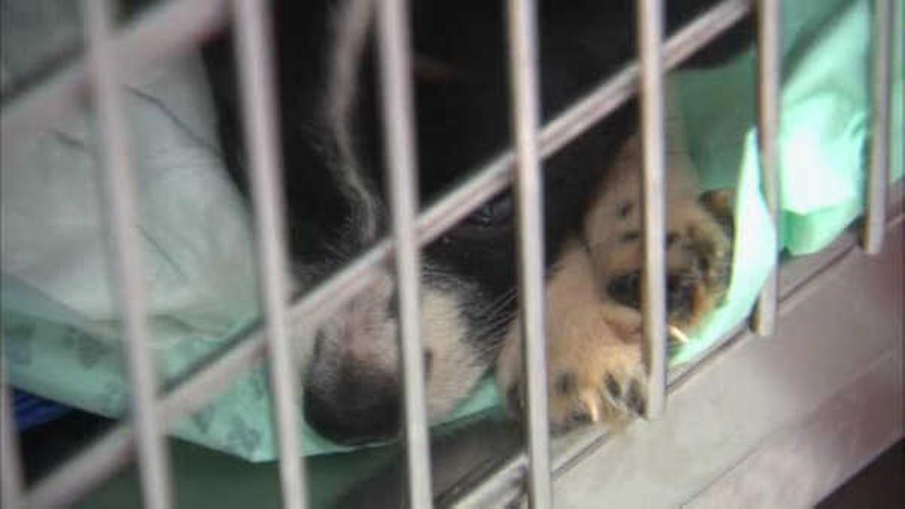 Call for donations after nearly 300 dogs rescued from N.J. hoarding home