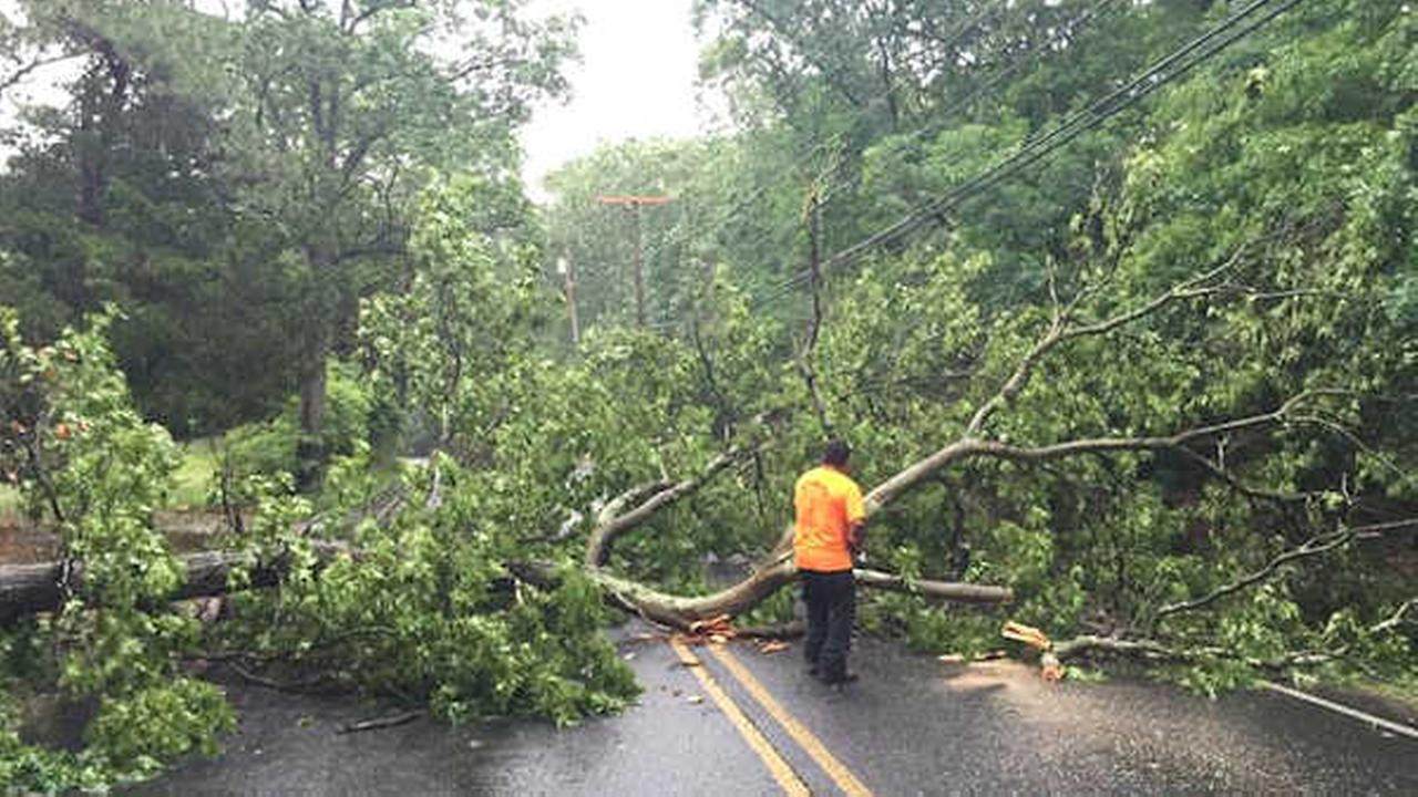 A large red oak tree came down on Newtons Corner Rd in Howell, New Jersey (Photo courtesy Ultimate Tree Service)