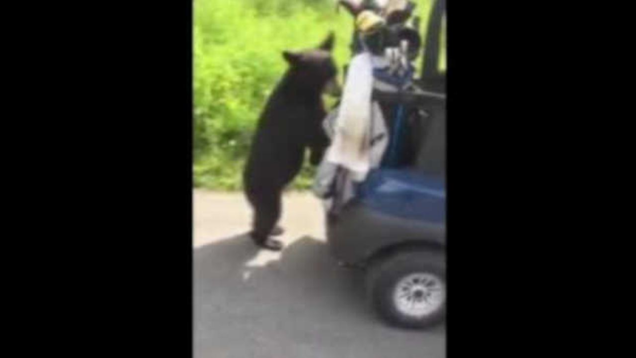 Bear cub interrupts golf game by climbing into golf cart in Alaska