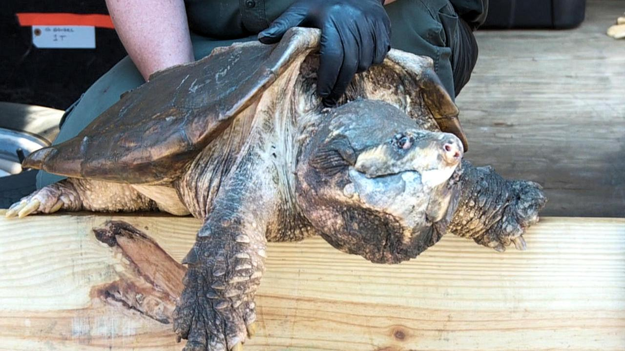 400 birds turtles seized in bellmore animal cruelty case abc7ny com