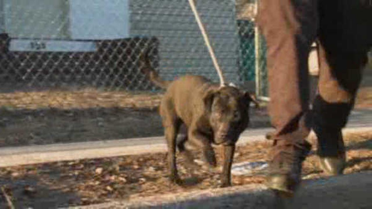Long Island man convicted for dog-fighting for fourth time