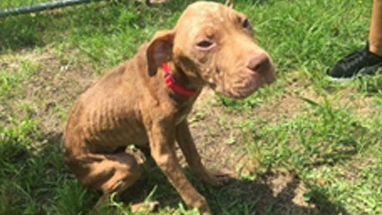 Animal control workers come to rescue of emaciated dog in New Jersey