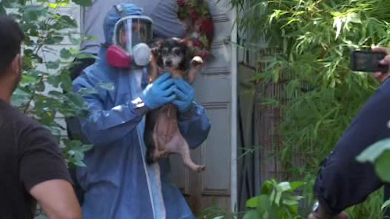 30 dogs found in hoarding situation in East Meadow