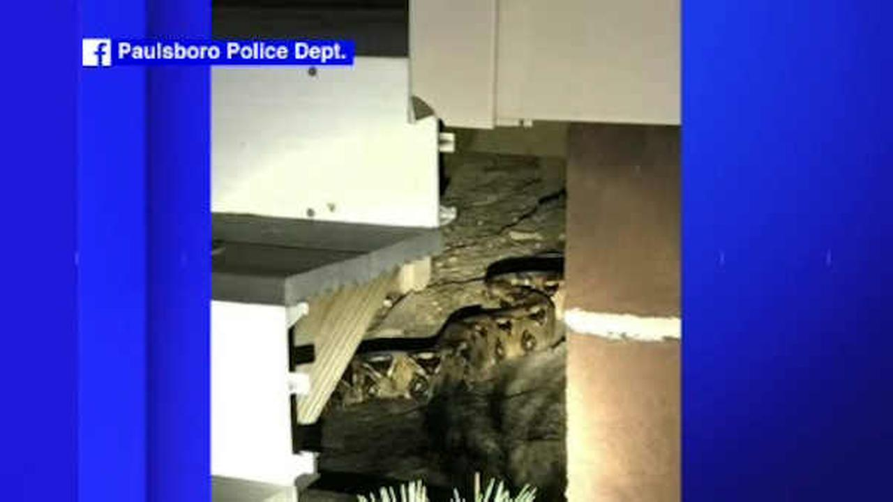 60-pound snake returned to owner after escaping in New Jersey