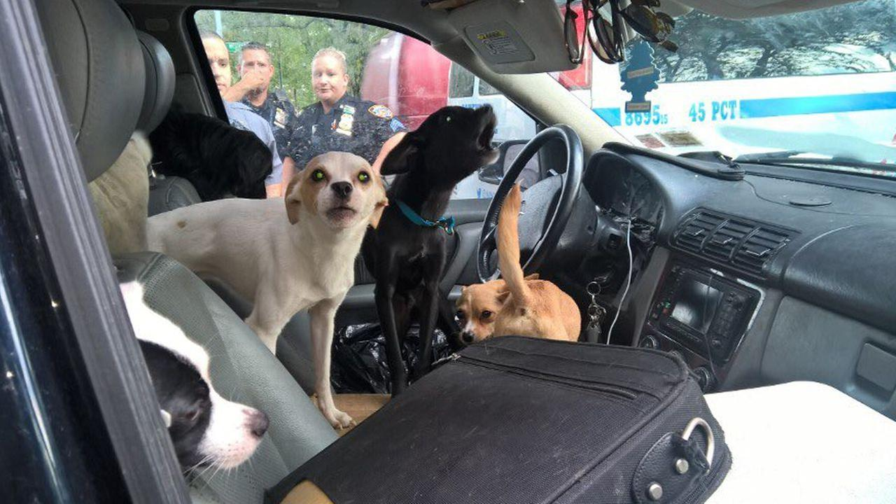 22 dogs found living inside SUV in the Bronx rescued by NYPD