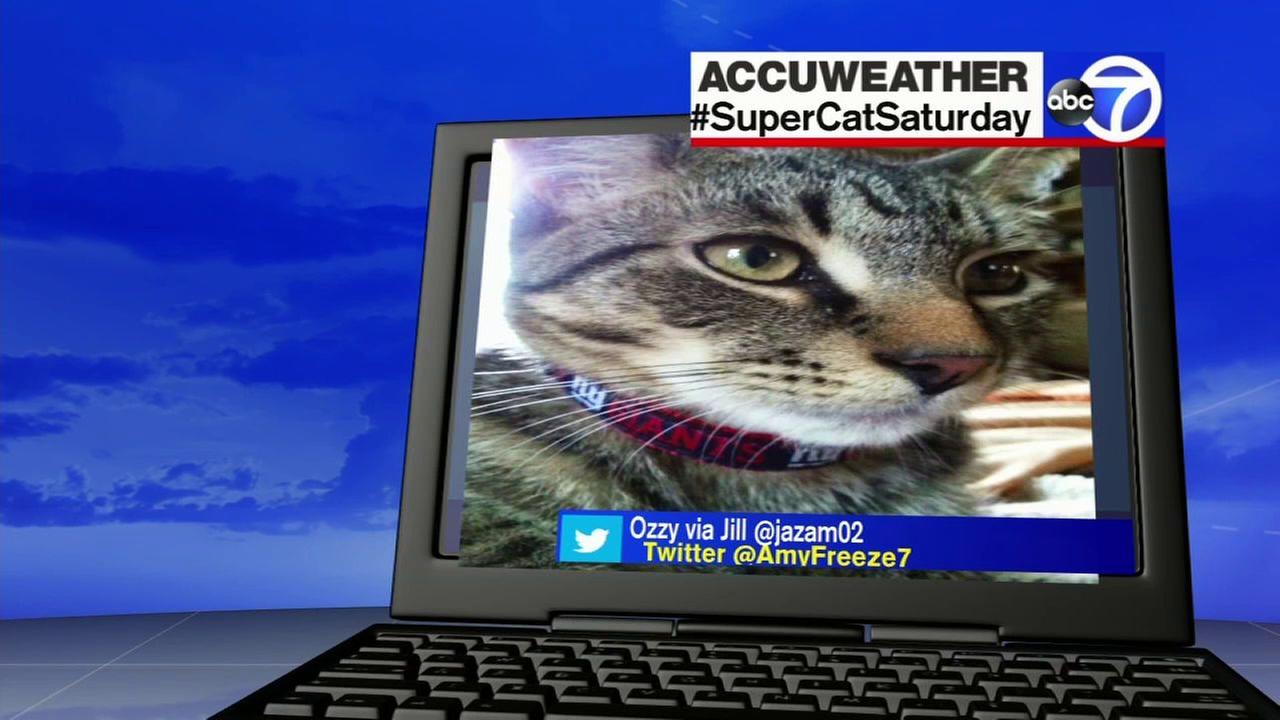 Super Cat Saturday - September 10, 2016