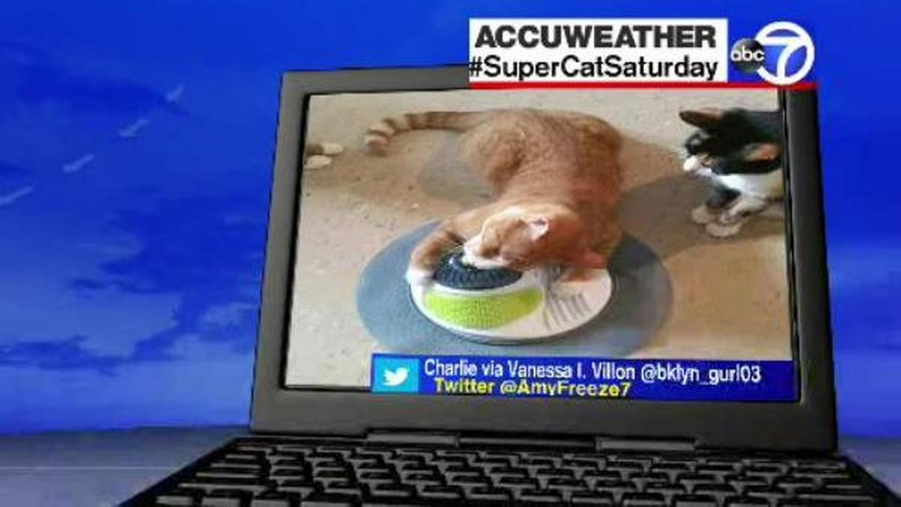 Send us your photos using Twitter and Instagram using the hashtags #SuperCatSaturday or #BigDogSunday, or send photos to Amy via Twitter @AmyFreeze7Eyewitness News