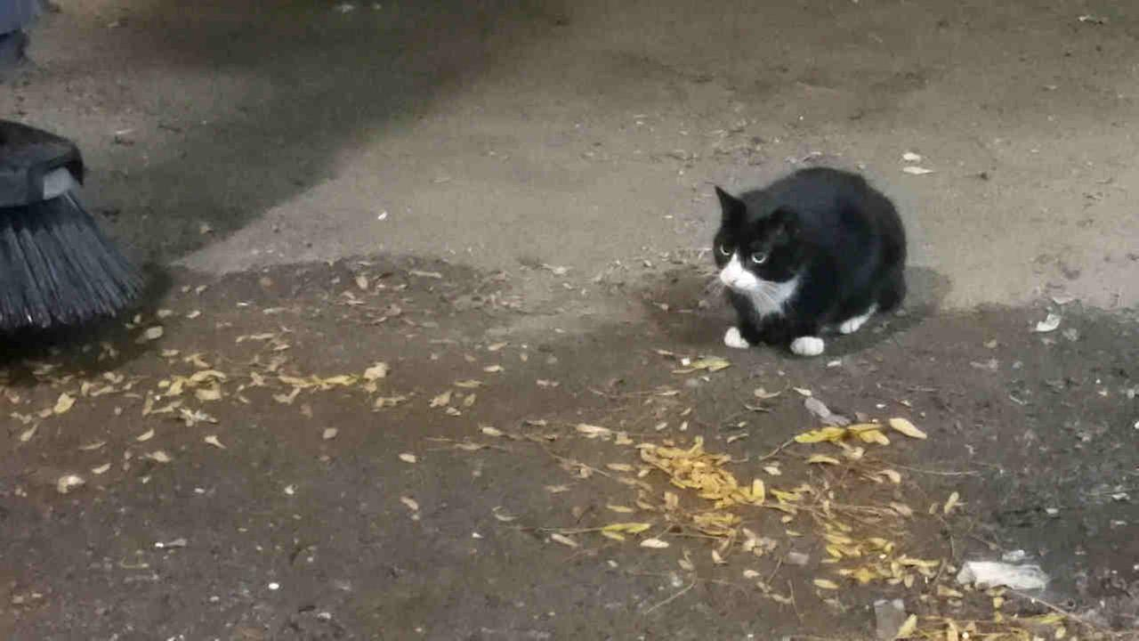 Sylvester, a feral cat, sits in a loading dock at the Jacob Javits Convention Center, Oct. 20 in New York.