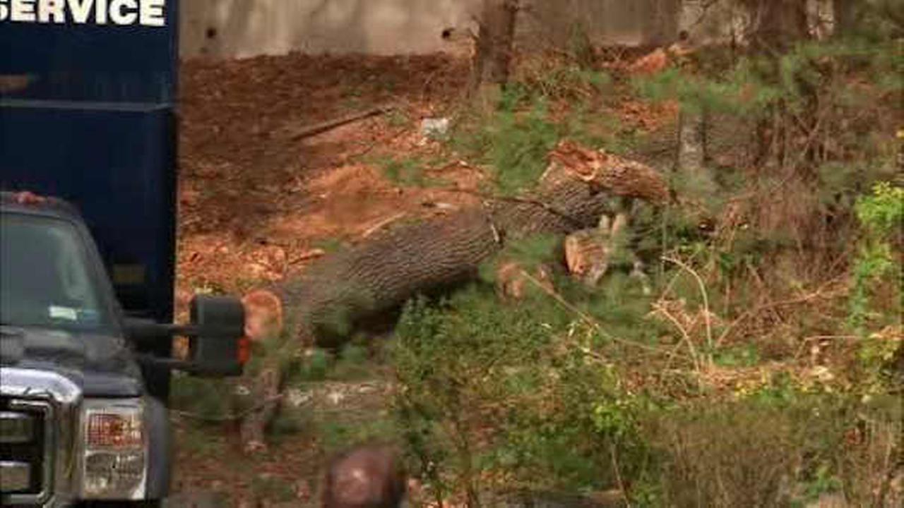 Tree service worker fatally struck by tree in Ramsey