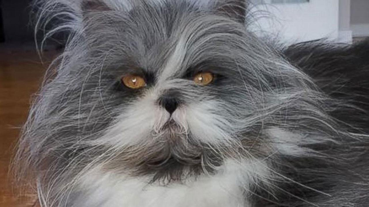 Cat or dog? The internet can't figure out what animal this is