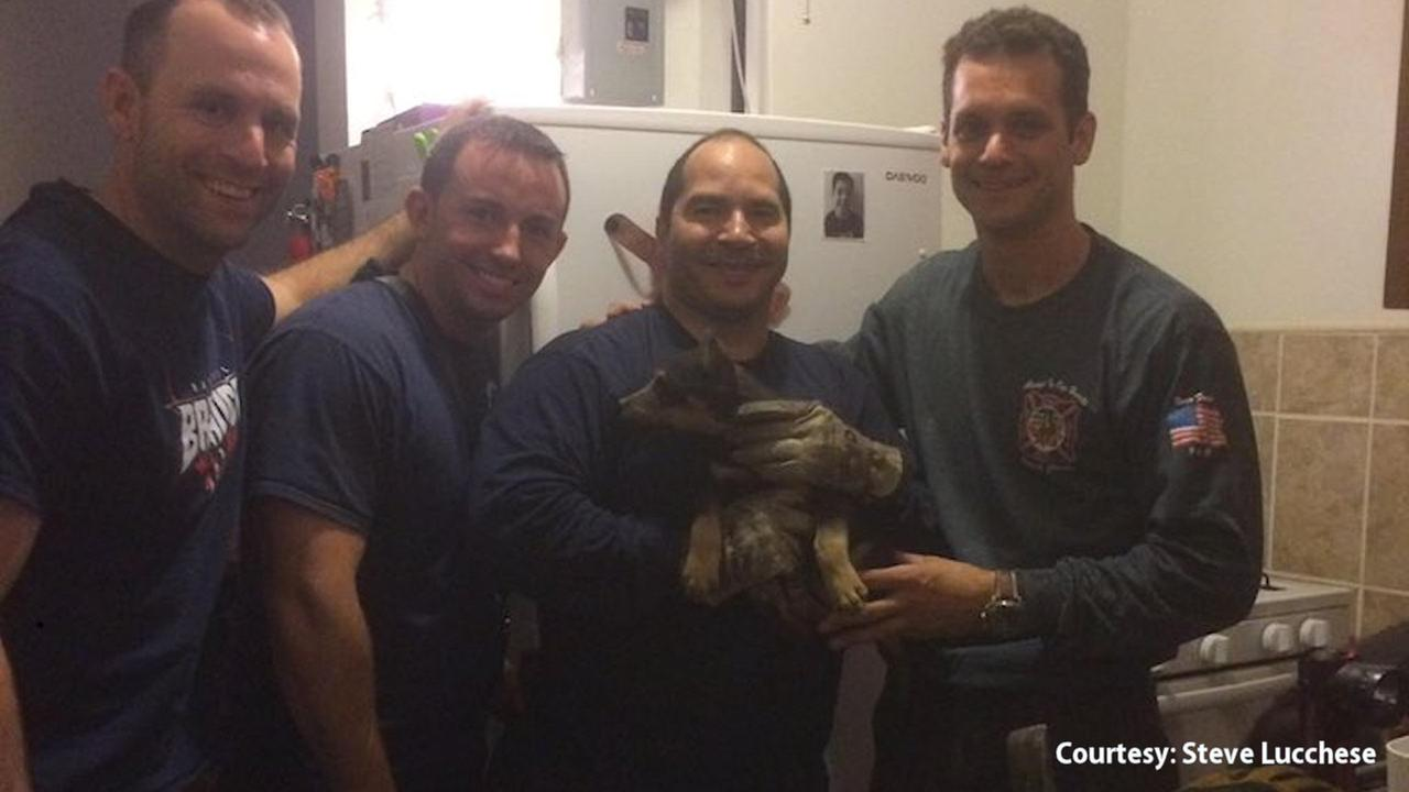 FDNY saves deaf and blind puppy stuck inside Bronx wall