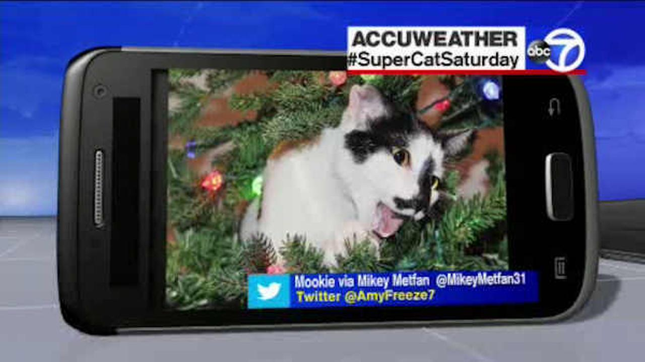 We love to see pictures of your furry friends at Eyewitness News, so send us photos of your dogs at ABC7NY and we may feature your pet on Eyewitness News!