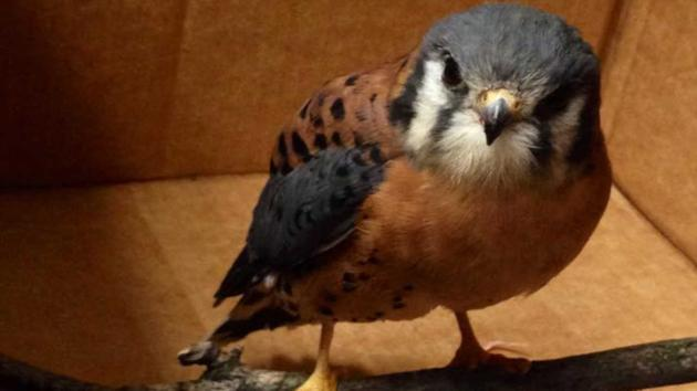 Long Island wildlife center thanks social media for stolen falcon's return