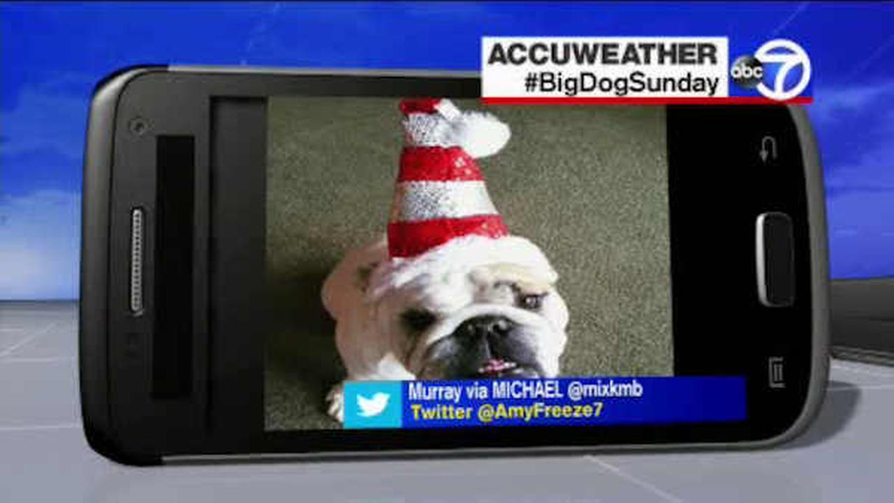 Send us your photos using Twitter and Instagram using the hashtags #SuperCatSaturday or #BigDogSunday, or send photos to Amy via Twitter @AmyFreeze7