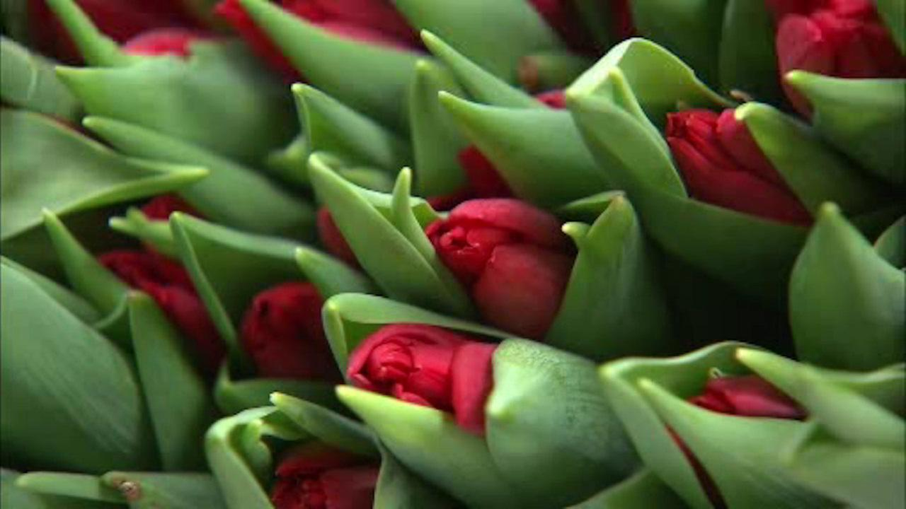U.S. Customs and Border agents keeping close eye on flower shipments for Valentine's Day