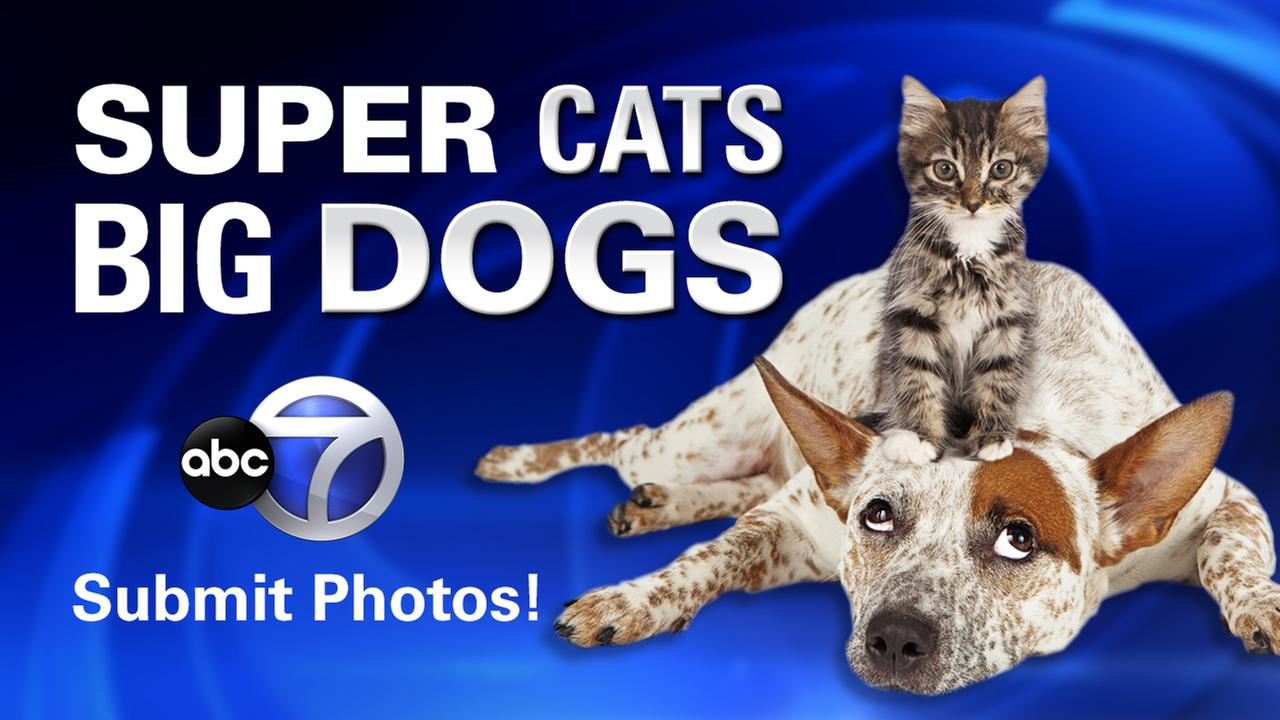 big dog sunday super cat saturday