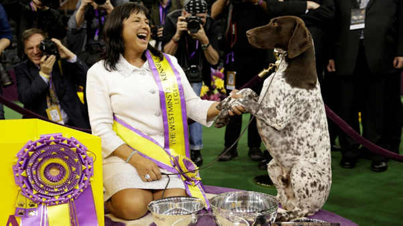 Valerie Nunes-Atkinson and CJ, a German shorthaired pointer, pose for photographers after CJ won best in show at the 140th Westminster Kennel Club dog show, Tuesday, Feb. 16, 2016